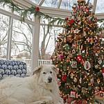 2015-12-16-Christmas Carroll