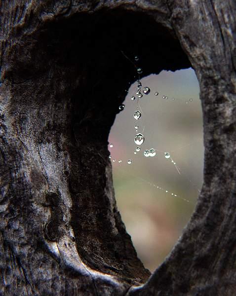 Knothole Droplets 222