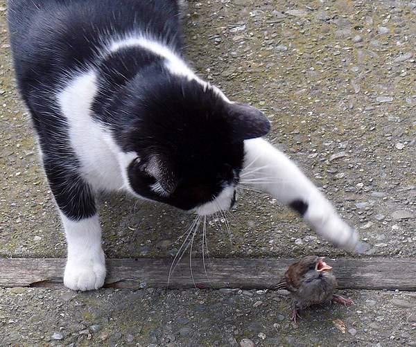 Karma Kitty and Sparrow