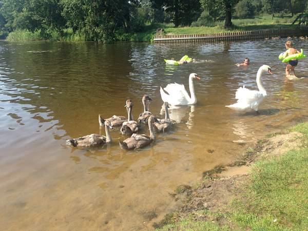 Swan Lake 222