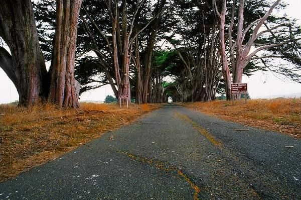 Tree_Arch