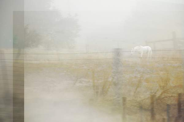 WHITE HORSE IN FOG...BUT DO WE STOP? 222