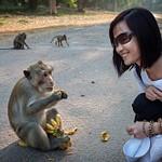 2014_12_Это про обезьянок