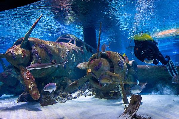 2015_04_Эхо_Подводный мир Анталии by Anatoly Strunin