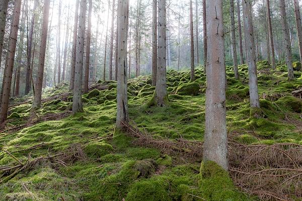 Schwarzwald, Germany by Eugene Osminkin