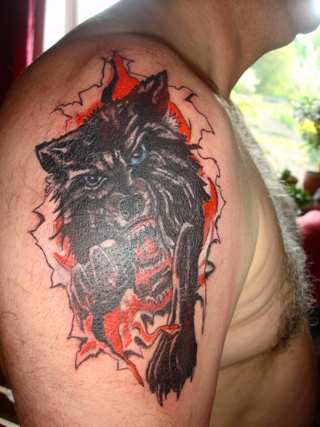 wolf by tander