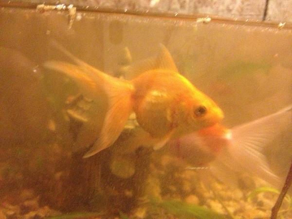 Ryba by tander