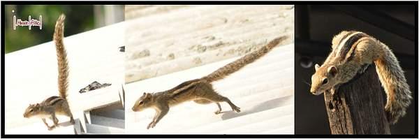 Flickr_Squirrel
