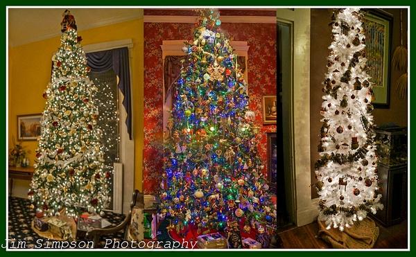 Christmas Trees by jimsimp3