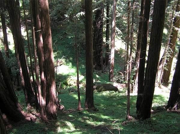 Wilder Redwoods 222