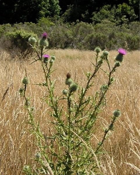 Wilder Wild Flowers by ForwardEver