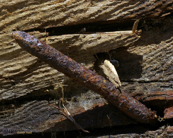 SMP-0187_Rusty_Nail by StevePettit