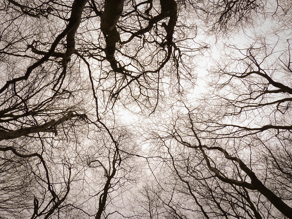 Branches (Feb 2013) by James Borland