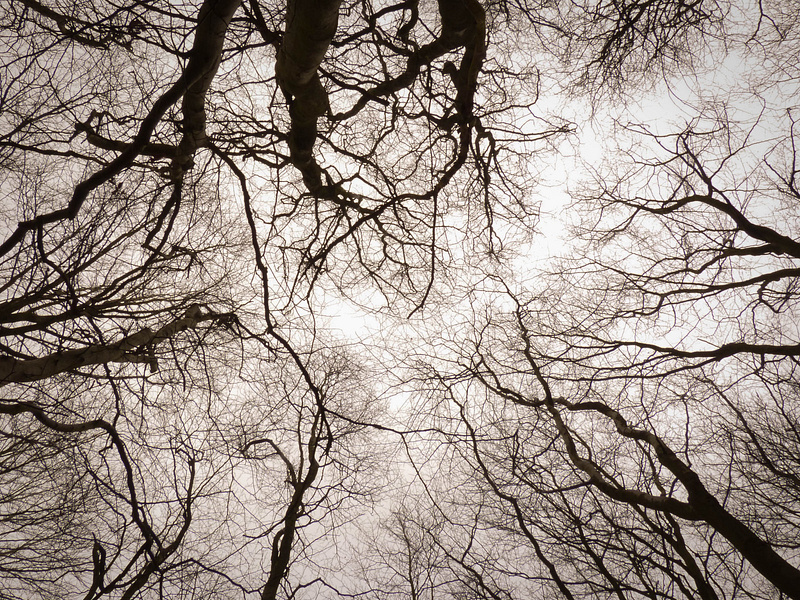Branches (Feb 2013)