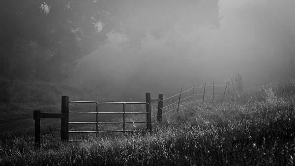 Fog 222