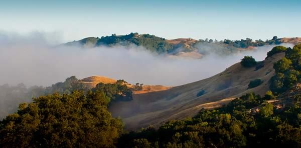 Morning Fog 222