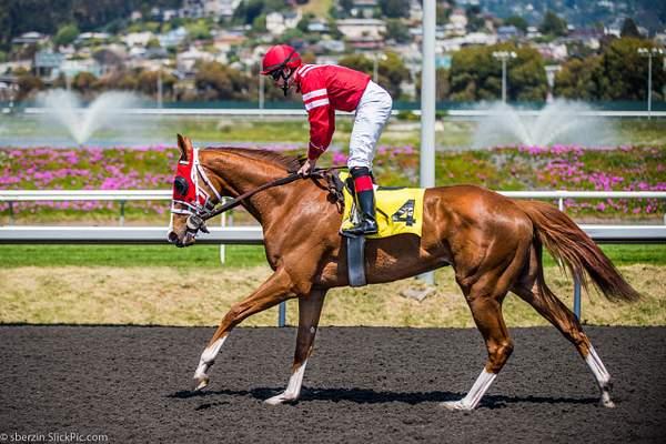 Horse Racing 14