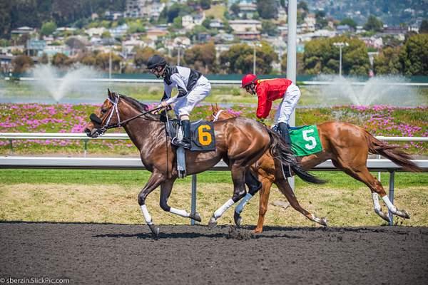 Horse Racing 15