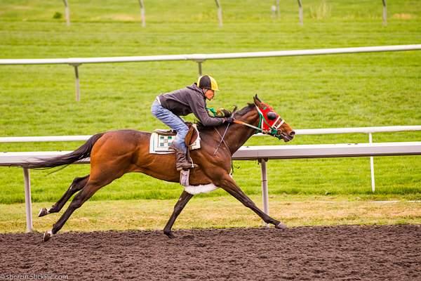 Horse Racing 3
