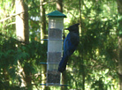 Birds of Our Backyard