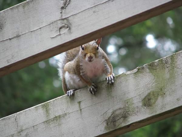 Squirrel 222