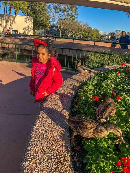 124-Disney 2017-IMG_5235 by PeterPlusMaria