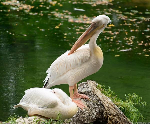 Zoo by Vitaliy Sharavara