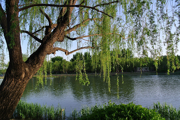 iPhone photo SP_4252950 by Zhaopian