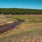 2016 Brown Bridge Natural Area in Mayfield, Michigan taken in July