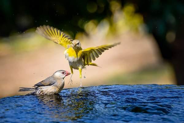 Visitors At the Bird Bath