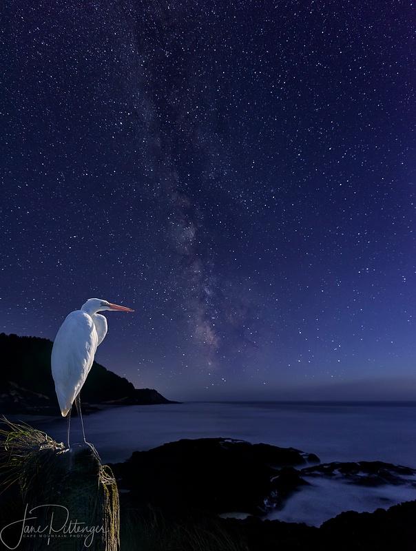 White Egret Watching the Milky Way