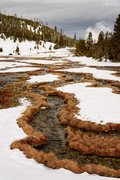 Stream Leading to the Steam