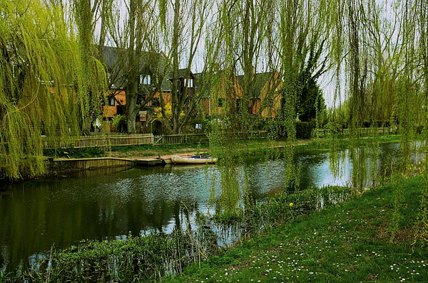 Willows by DavidNunnerley