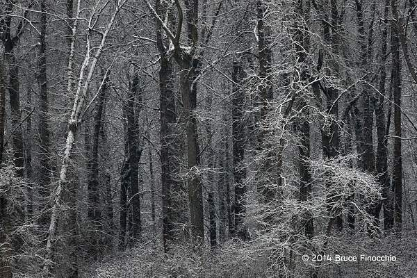 Deep Into The Winter Woods 222