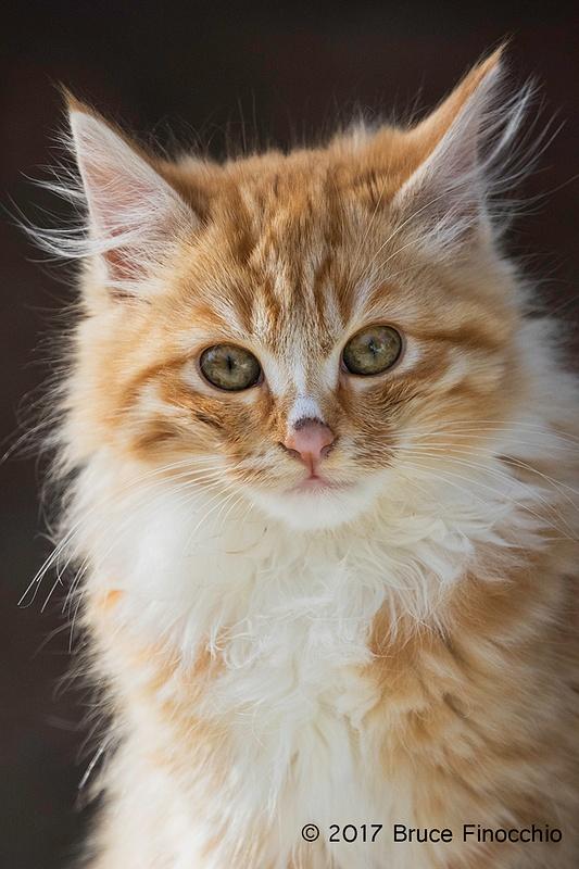Portrait Of Tawny