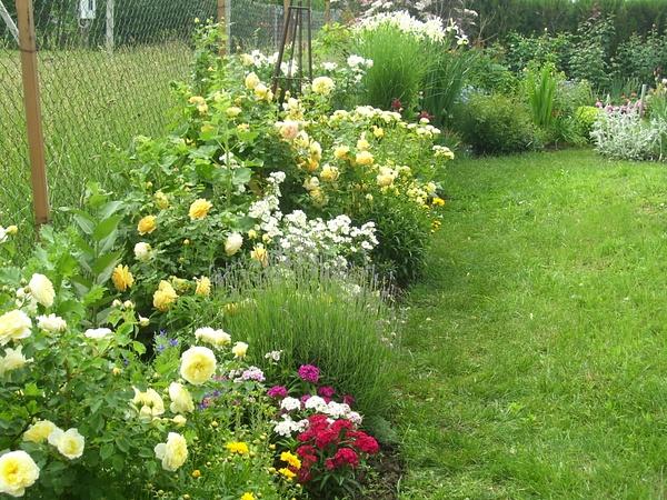 Garden by MarijaSpan