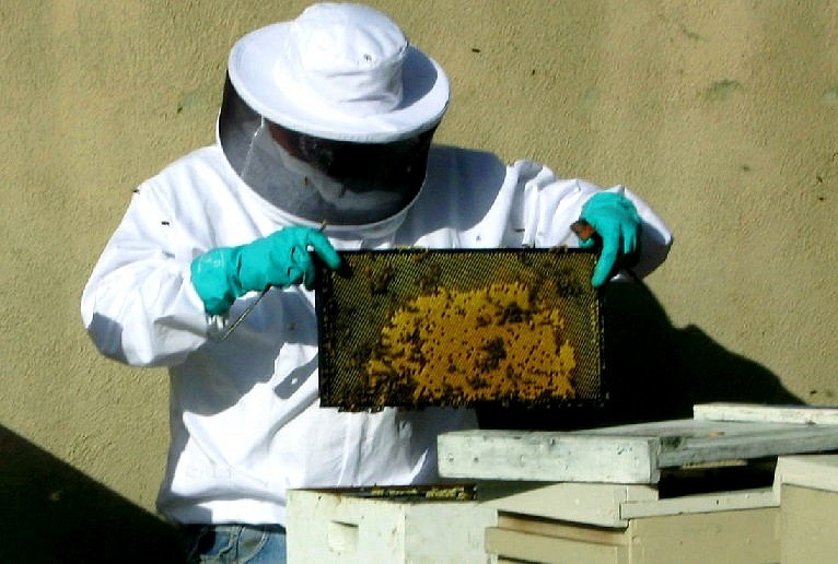 Los Angeles Bee Removal Service