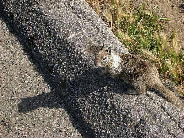 Peter Rabbit followed us around by markpw2