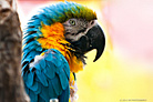 Oakland Zoo 2011