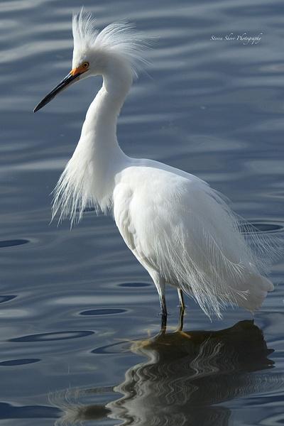 Bird Photos by Steven Shorr
