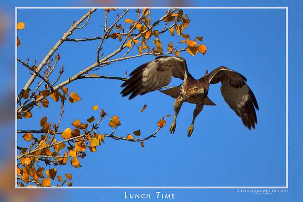 Lunch_Time 222