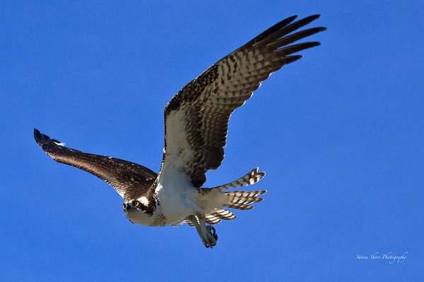 Osprey-2 222
