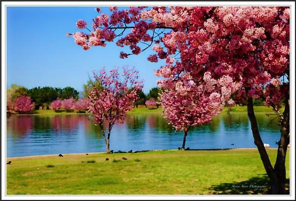 Springtime at Lake Balboa 222
