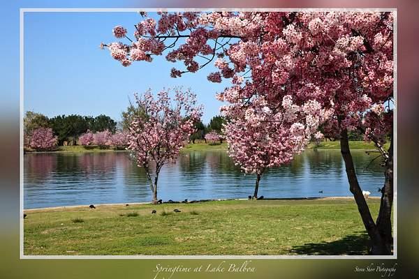 Springtime at Lake Balboa 2 222