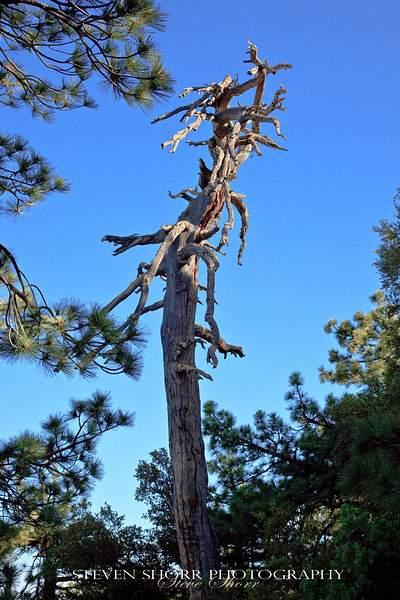 Tahquitz Peak Hike 4 222