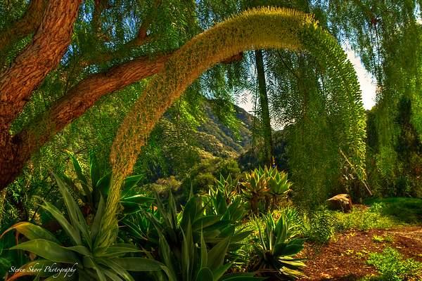 Vibrant Garden 1 222