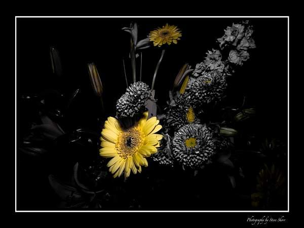 Floral Surreal 222