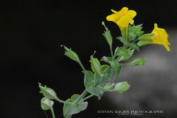 Wildflower 222