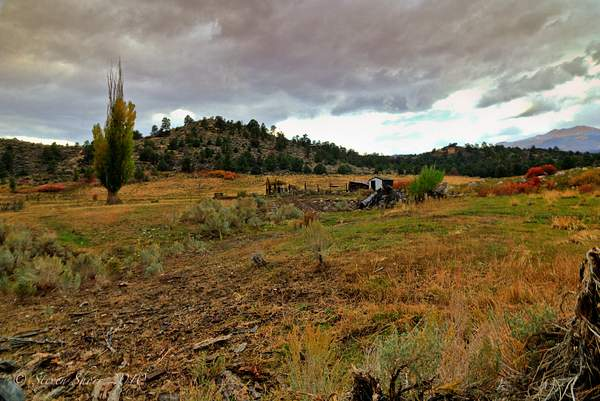 Eastern Sierras Fall Colors 222