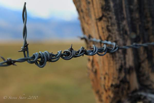 Barbed Wire 222
